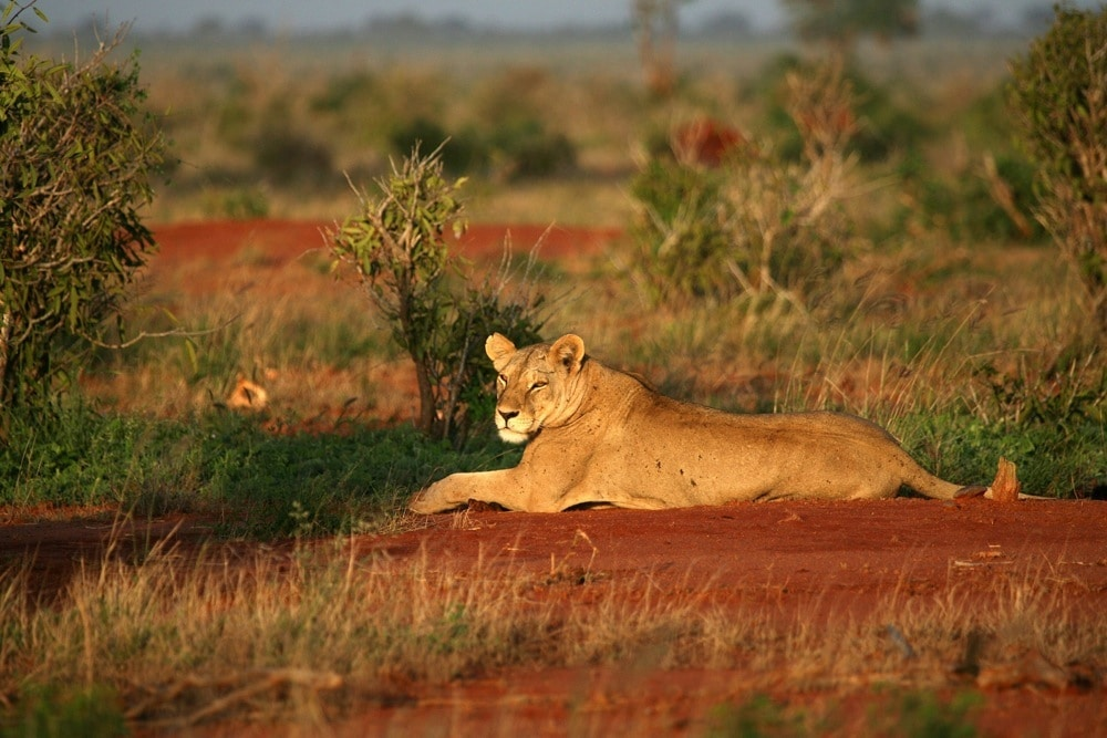 Kenia: Privatsafari Tsavo Nationalpark Ost und West 3 Tage