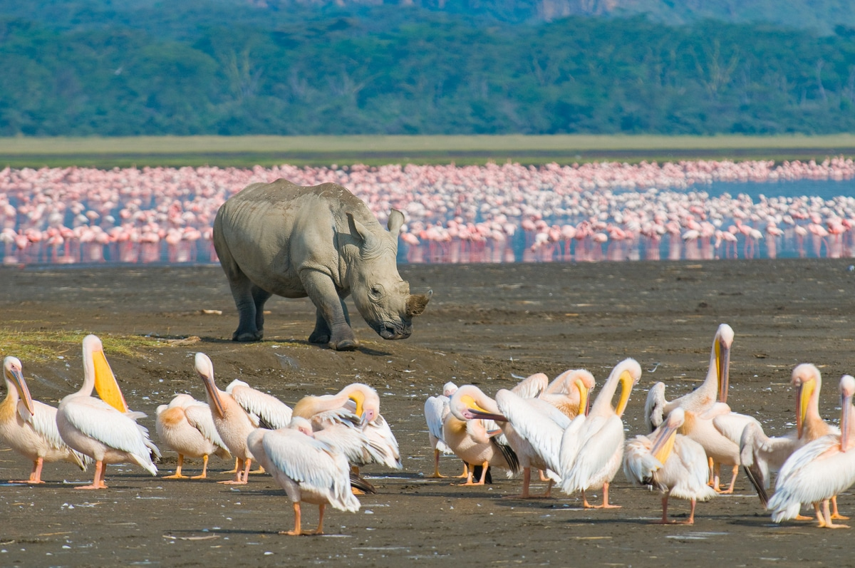 Kenia: Privatsafari Kenias Höhepunkte in 8 Tagen