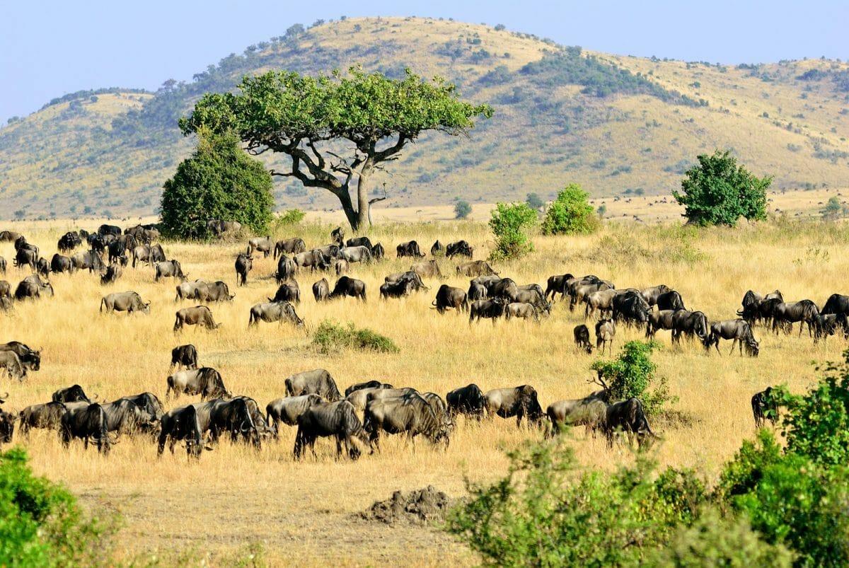 Kenia: Safari Maasai Mara