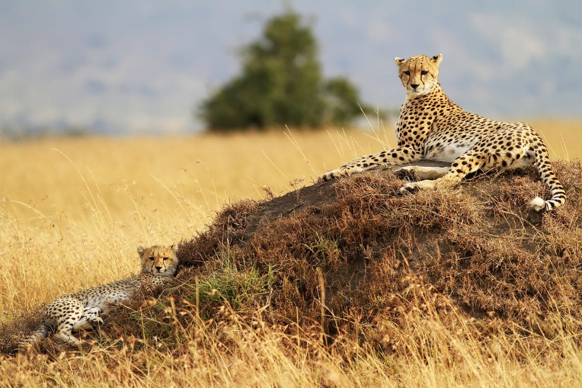 "Tansania: Privatsafari ""Tembo"" 5 Tage / 4 Nächte"