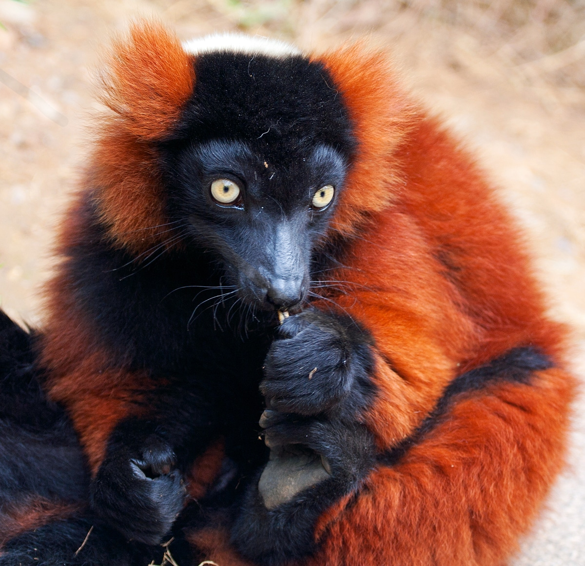 Madagaskar: Privatreise Madagaskar Total 22 Tage