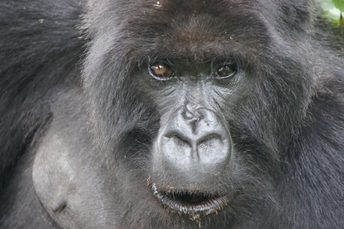 Uganda und Ruanda: Rundreise Gruppentour 21Tage