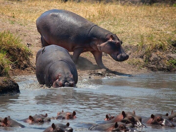 Tansania: 9 Tage Fly Inn Katavi — Ruaha — Selous
