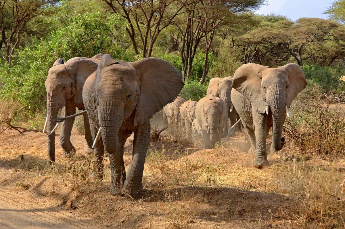 Elefanten bei Safari mit Klüger Reisen