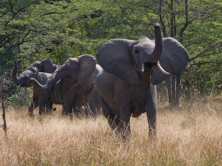 Tansania Elefanten Safari in Tansania mit Klüger Reisen