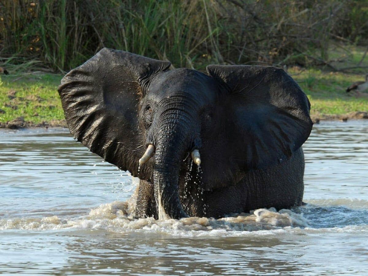 Tansania: Privatsafari südliche Parks 8 Tage