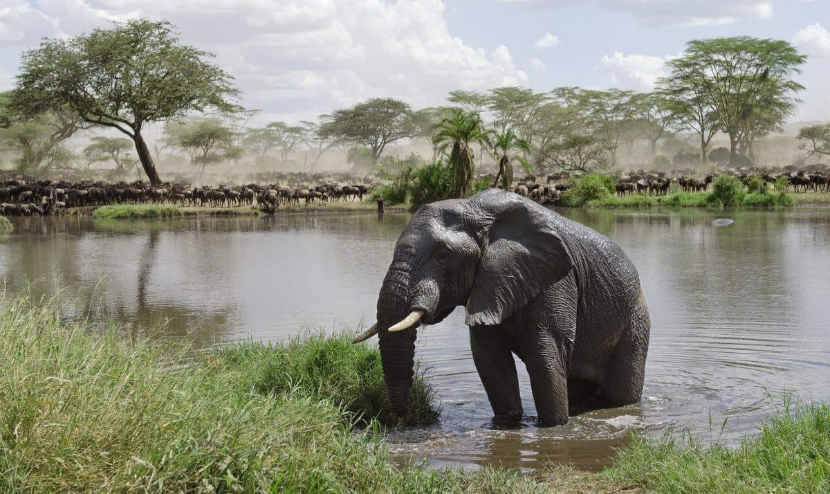 Privatsafari Kenia und Tansania 15 Tage