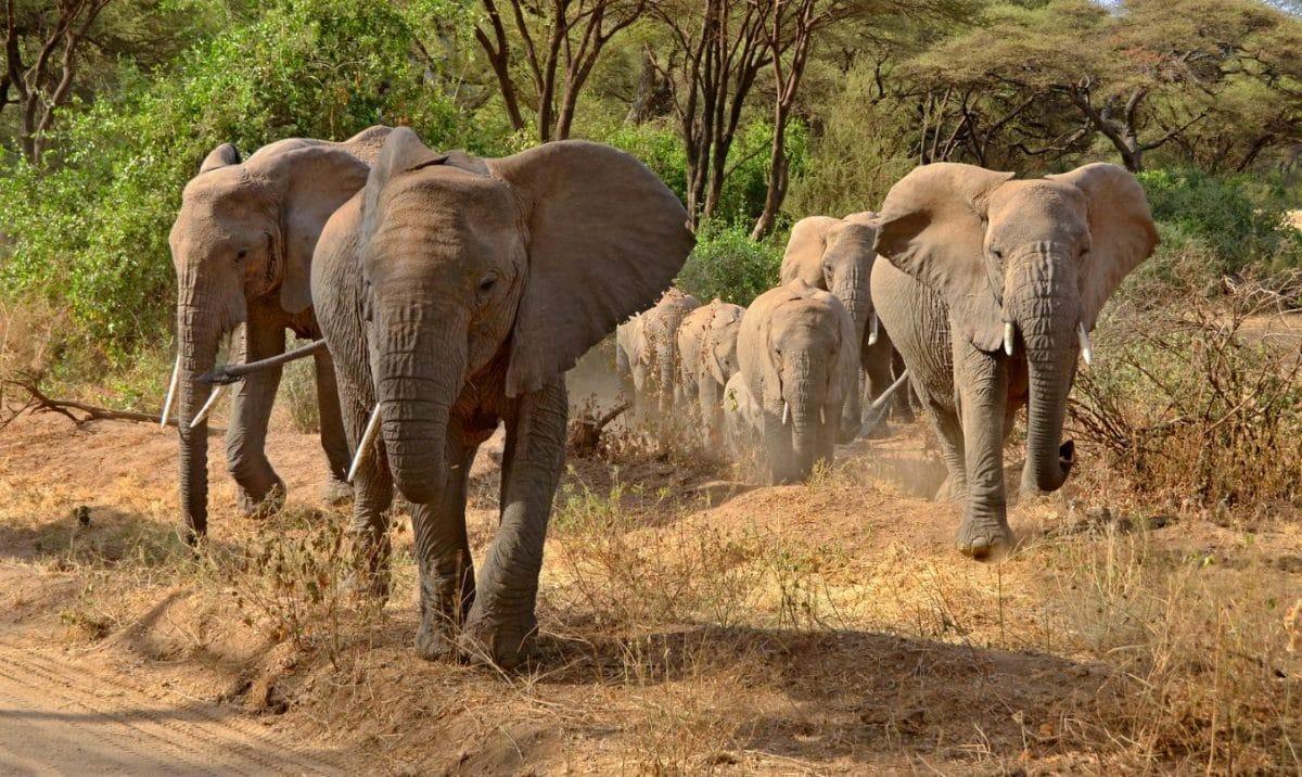 "Tansania Privatsafari ""Chui"" 7 Tage / 6 Nächte"