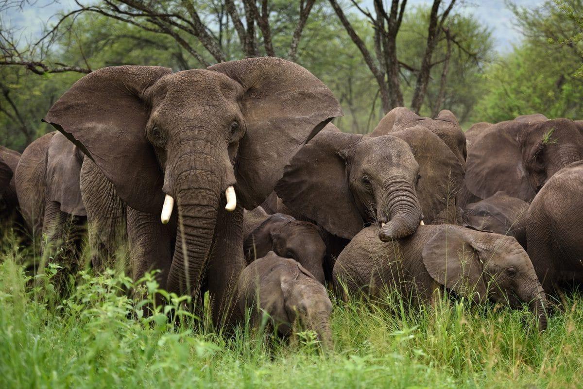 "Tansania: Gruppensafari ""Best of Northern Circuit"" 6 Tage/5 Nächte"