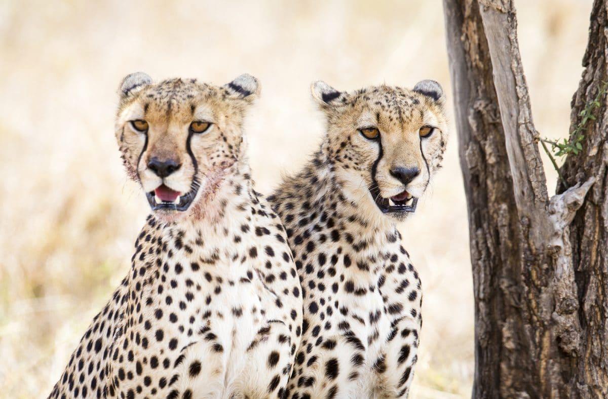"Tansania: Gruppensafari ""Big Sopa"" 6 Tage/5 Nächte"