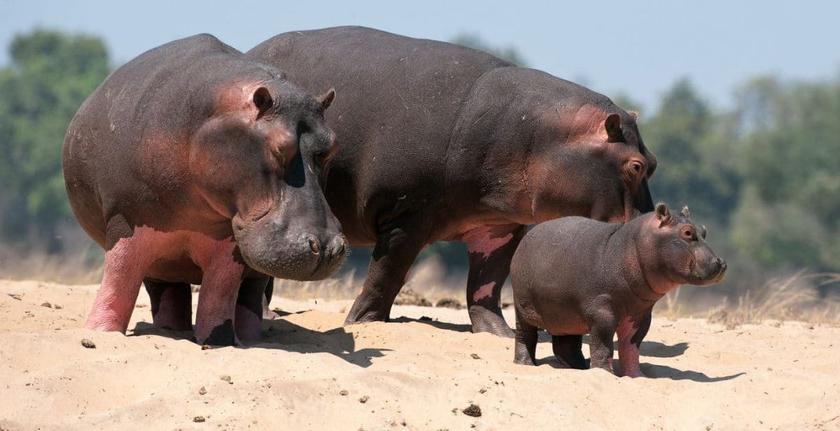 "Tansania: Privatsafari ""Ziwa"" 6 Tage / 5 Nächte"