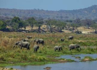 Elefantes no sul da Tanzânia com Klüger Viajar