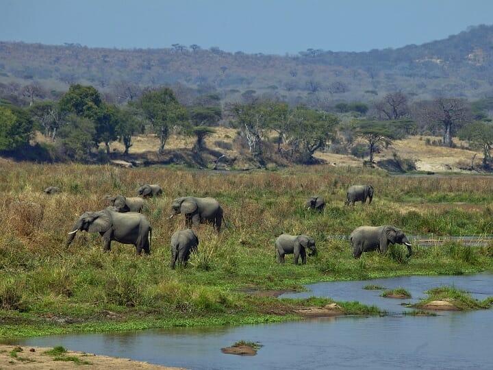 Elefanten n Südtansania mit Klüger Reisen