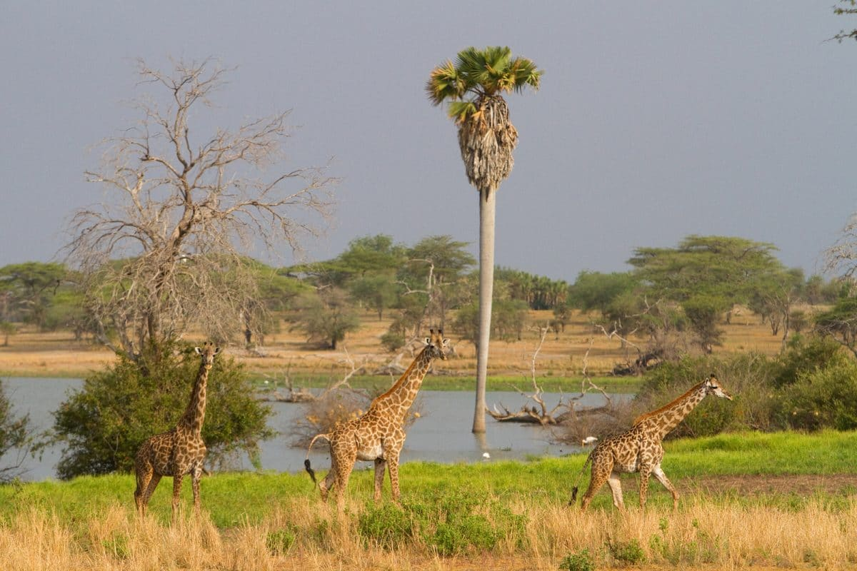Tansania: Privatsafari Selous Game Reserve 4 Tage
