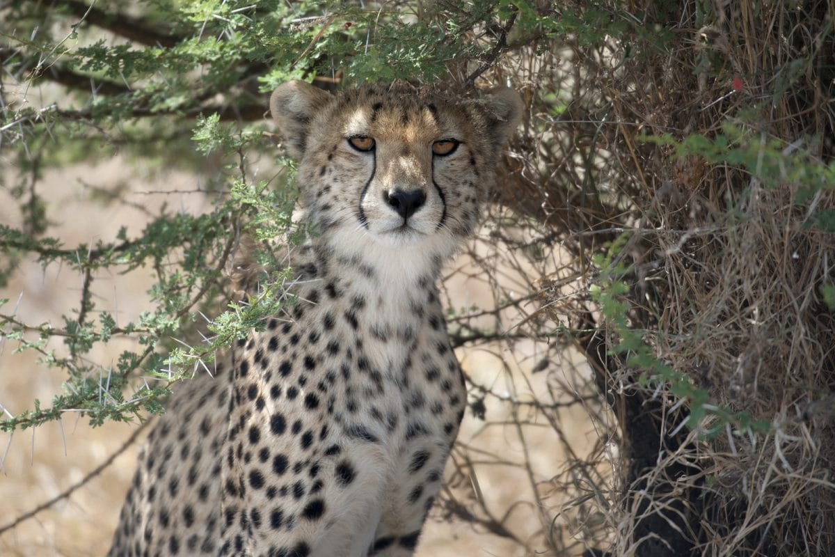 Tansania: 5 Tage — Campingsafari