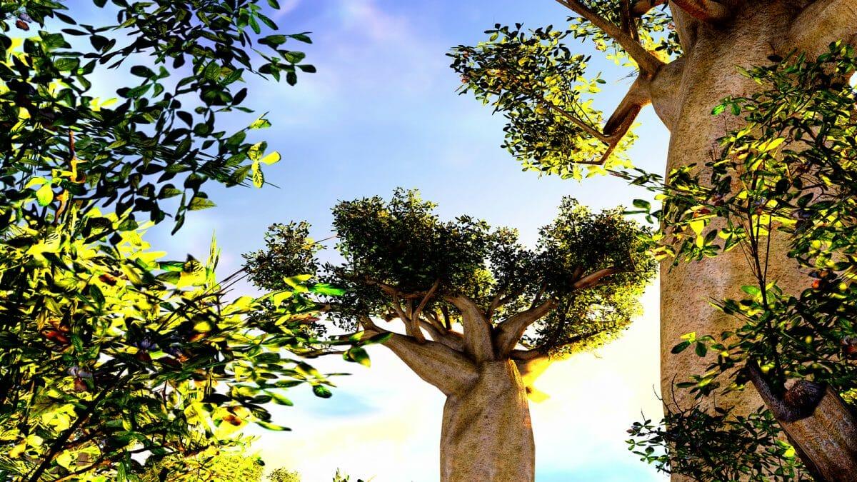Madagaskar: Privatreise Süden und Morondava mit seinen Baobabs 10 Tage