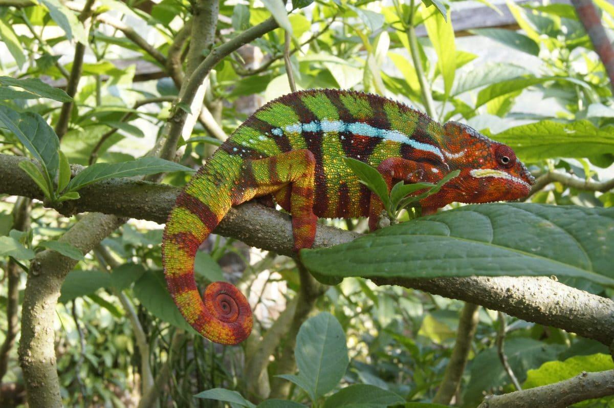 Madagaskar_Klaus Heimer und Klueger Reisen