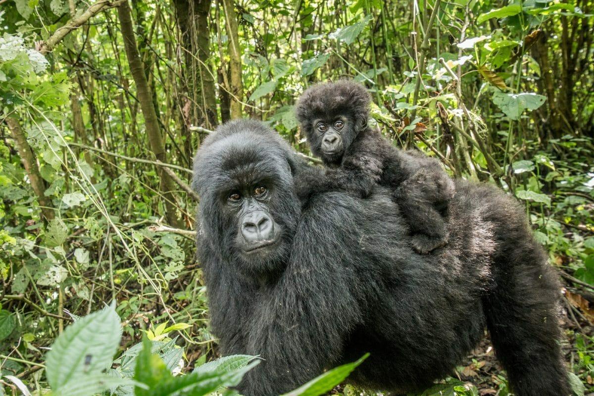 Ruanda: Umfassende Ruanda Rundreise 14 Tage