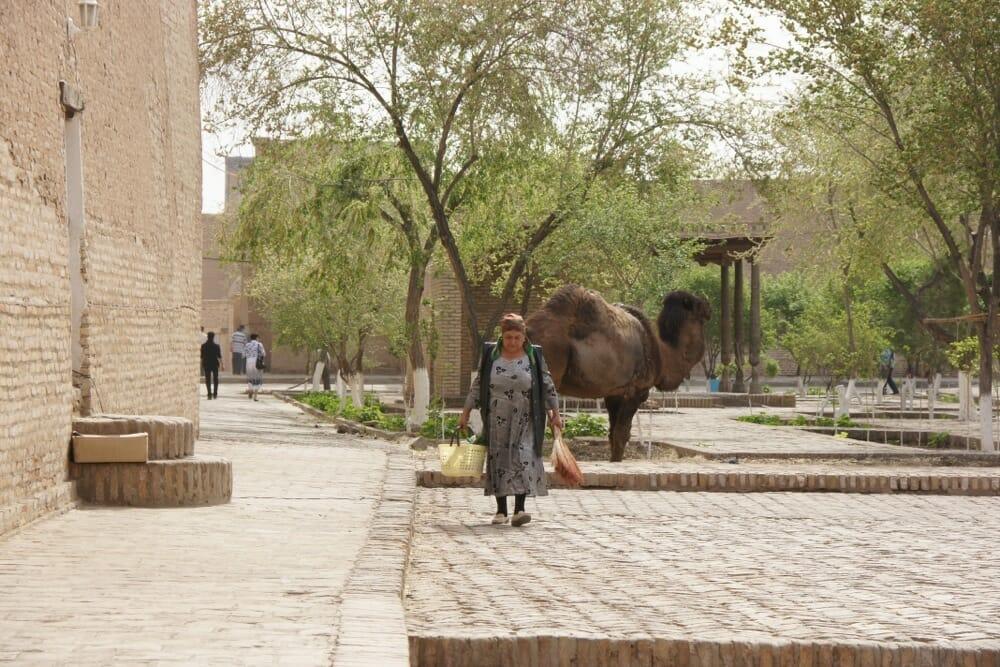 Kamel und Frau in Altstadt Chiwa, Usbekistan