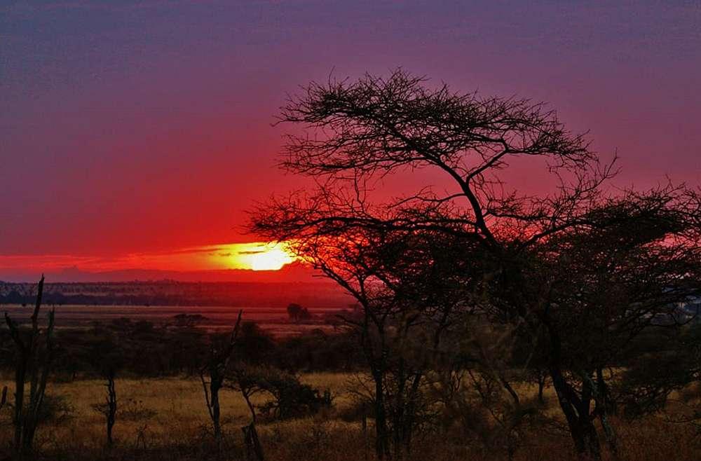 Tansania Sonnenuntergang Savanne