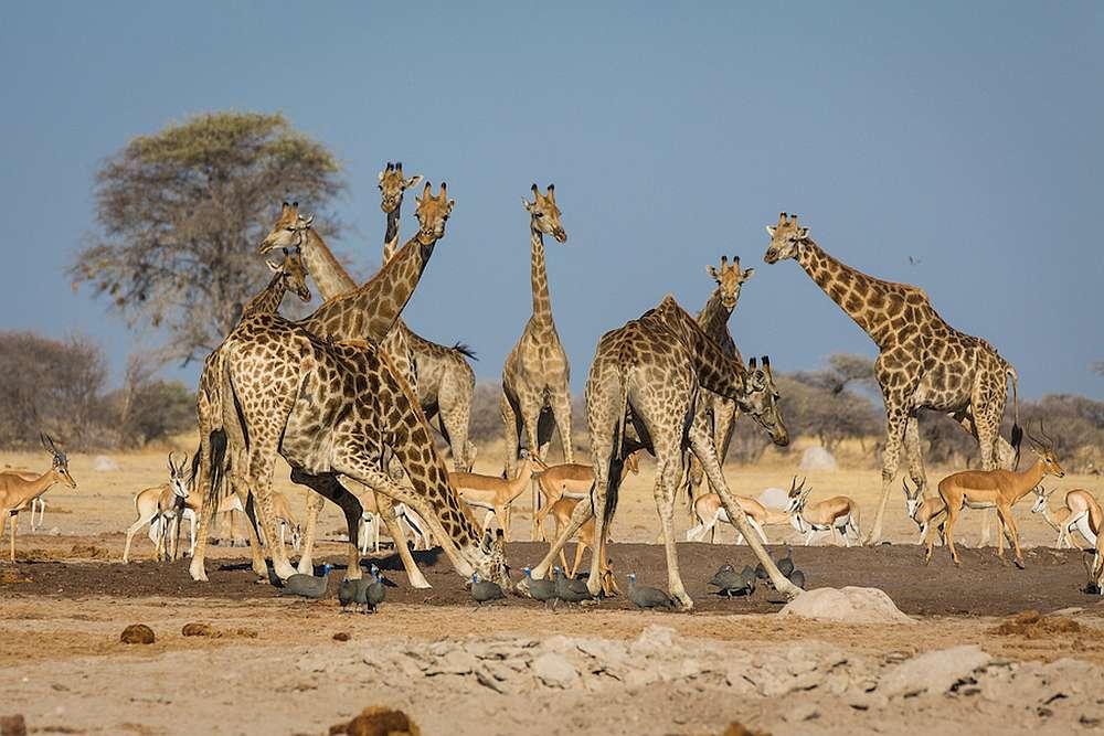 Botswana: Chobe Nationalpark Gruppensafari 7 Tage